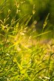 美丽的夏天草甸开花和草在盛夏节日天期间在拉脱维亚 库存照片