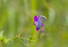美丽的夏天蝴蝶 库存照片