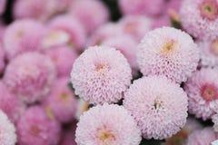 美丽的多彩多姿的大丽花花花束  库存照片