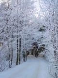 美丽的多雪的树和方式在冬天,立陶宛 库存照片