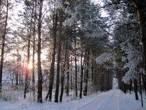 美丽的多雪的树和方式在冬天,立陶宛 免版税库存照片