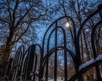 美丽的多雪的树和篱芭在冬天 免版税库存图片