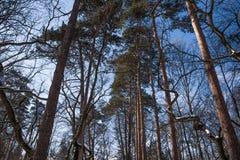 美丽的多雪的树在冬天 库存图片