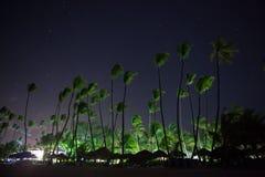 美丽的夜空、星和棕榈树 免版税库存图片