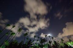 美丽的夜空、星和棕榈树 库存照片