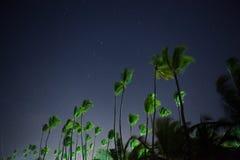 美丽的夜空、星和棕榈树 免版税库存照片