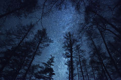 美丽的夜空,银河和树 免版税库存照片