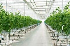 美丽的大明亮的温室 免版税库存图片