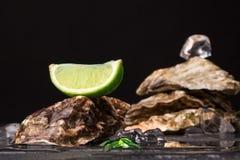 美丽的大牡蛎特写镜头与冰块和石灰段的在黑背景的上面 可口热带海软体动物 库存照片