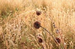 美丽的大草原花心爱观察者 库存图片
