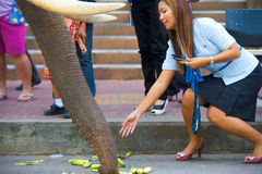 美丽的大象提供的树干妇女 库存图片
