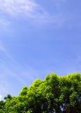 美丽的天空结构树 免版税库存图片