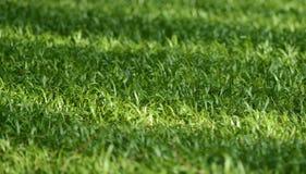 美丽的太阳在绿草发光 库存照片