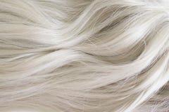 美丽的头发 长的卷曲金发 在轻的灰金发碧眼的女人的颜色 免版税库存图片