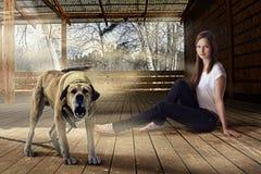 美丽的女孩和咆哮看家狗户外在木游廊 图库摄影