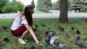 美丽的女孩哺养的鸽子,鸠在公园 股票视频