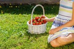 美丽的女孩画象有草莓篮子的  免版税图库摄影