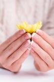 美丽的女性手指拿着一朵花 库存照片
