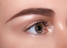 美丽的女性眼睛特写镜头宏指令与完善的形状眼眉的 清洗皮肤,时尚naturel构成 好视觉 图库摄影