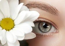美丽的女性眼睛特写镜头宏指令与完善的形状眼眉的 清洗皮肤,时尚naturel构成 免版税库存图片