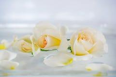 美丽的奶油、白玫瑰和疏散瓣 免版税图库摄影