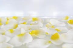 美丽的奶油,白色驱散了玫瑰花瓣 免版税图库摄影