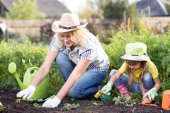 美丽的妇女和chid女儿在床上的种植幼木在国内庭院里夏日 从事园艺的活动与 免版税图库摄影