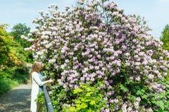美丽的妇女在开花的树丁香下的春天庭院里 免版税图库摄影