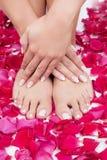 美丽的妇女的手和腿有红色玫瑰花瓣的 免版税图库摄影