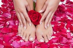 美丽的妇女的手和腿有红色玫瑰花瓣的 免版税库存照片