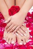 美丽的妇女的手和腿有红色玫瑰花瓣的 免版税库存图片