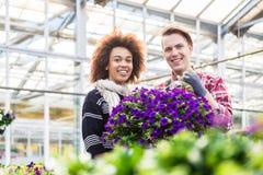 美丽的妇女认为买芬芳盆的紫色喇叭花 图库摄影