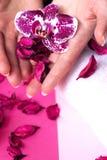 美丽的妇女递拿着一朵兰花花,在桃红色backgrou 免版税库存照片