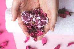 美丽的妇女递拿着一朵兰花花,在桃红色backgrou 库存图片