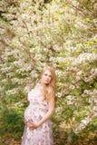 年轻美丽的妊妇在开花的树附近拥抱她的手腹部 库存图片