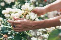 美丽的婚礼花束在新娘的手上 免版税图库摄影
