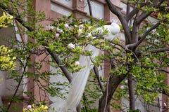 美丽的孔雀画象与羽毛的 图库摄影