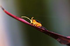 美丽的宏观昆虫的图片 免版税库存图片