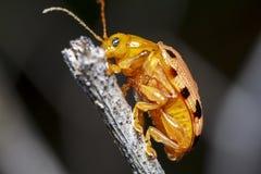 美丽的宏观昆虫的图片 库存照片
