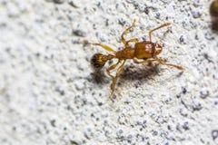 美丽的宏观昆虫的图片 免版税库存照片