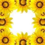 美丽的宏观花,向日葵背景 免版税库存图片