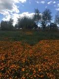 美丽的室外雏菊花在自然和公园 免版税库存照片