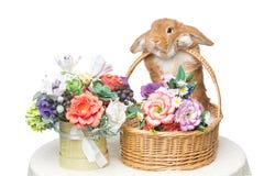 美丽的家兔 免版税图库摄影