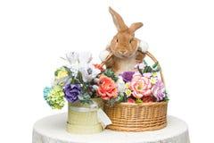 美丽的家兔 免版税库存照片
