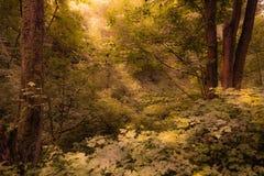 美丽的密集的森林 免版税库存照片