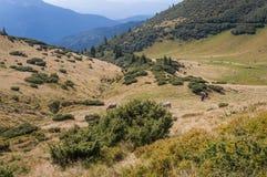 美丽的小山和山充满阳光 图库摄影