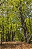 小径在一个美丽的绿色森林里 免版税图库摄影