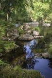 美丽的小河流经的森林风景在夏天 库存照片