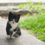 美丽的小猫一点 库存图片