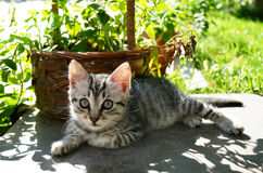 美丽的小猫在庭院里 免版税库存照片